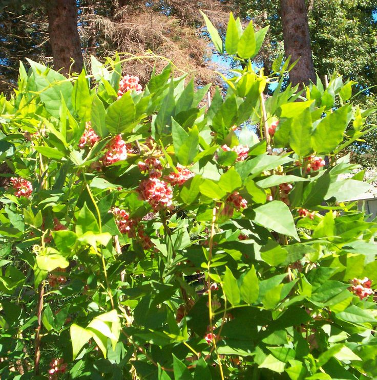 Native Edible Plants Australia: 17 Best Images About Cook Book