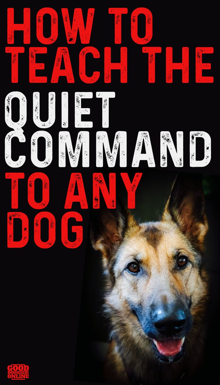 """How to Teach the """"Quiet"""" Command and Get Your Dog to Stop"""
