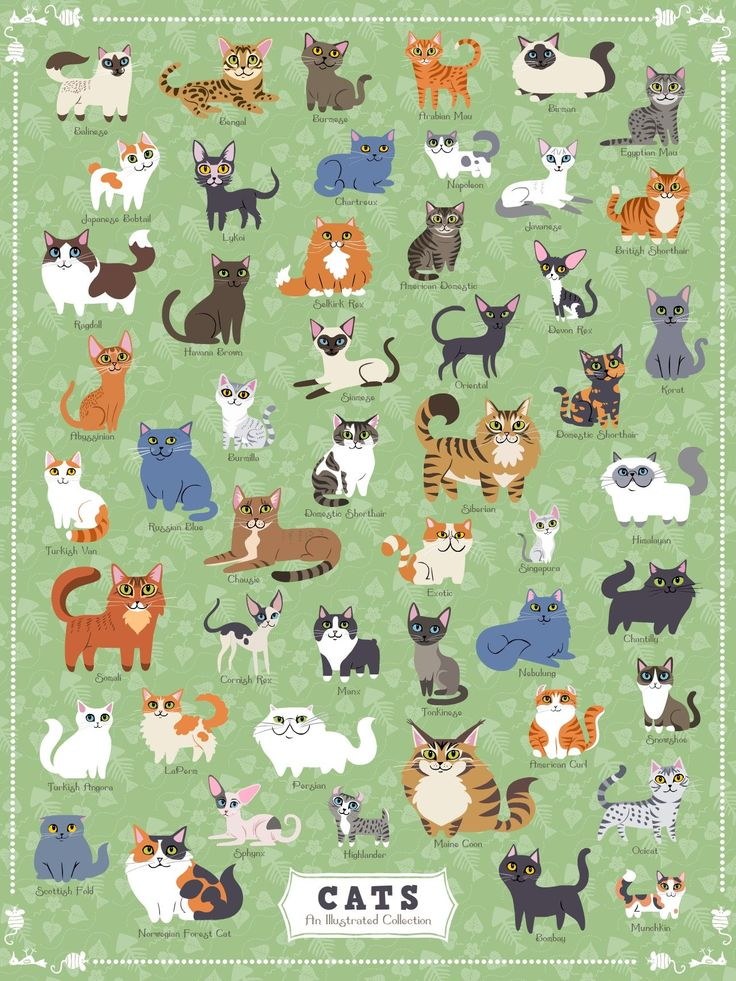 Cats of America 500 Piece Jigsaw Puzzle