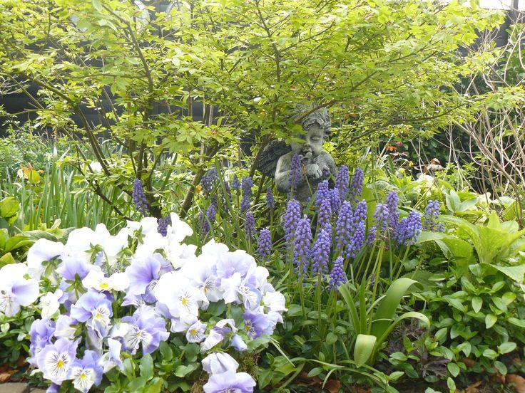 Euonymus alatus (kardinaalsmuts). Blauwe druifjes, muscari, Narcis, Helleburus, Viola,  Engel. Carlasstijl