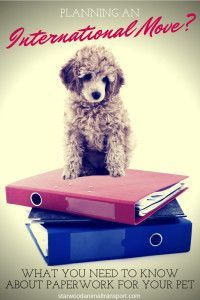 What Paperwork Do I Need For My Pet's Relocation To Another City Or Country http://starwoodanimaltransport.hs-sites.com/blog/what-paperwork-do-i-need-for-my-pets-relocation-to-another-city-or-country/ /starwoodpetmove/