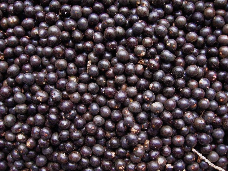The New [Superfood] Kids on the Block (Part 3): The Maqui Berry