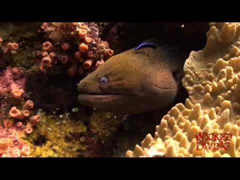 Komodo Liveaboard - Diving with eels http://wickeddiving.com/wd-liveaboards/komodo-liveaboard/