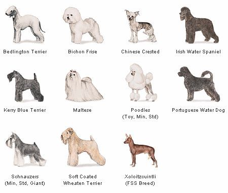Allergic to dog - Hypoallergenic dog breeds, any dog that does not shed or is hairless.