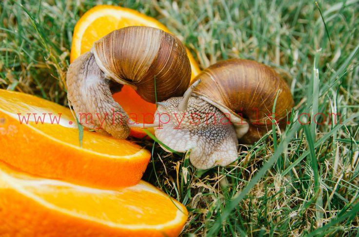 Amazing Roman snails