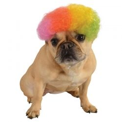 dog halloween costumes costumes for small and large dogs