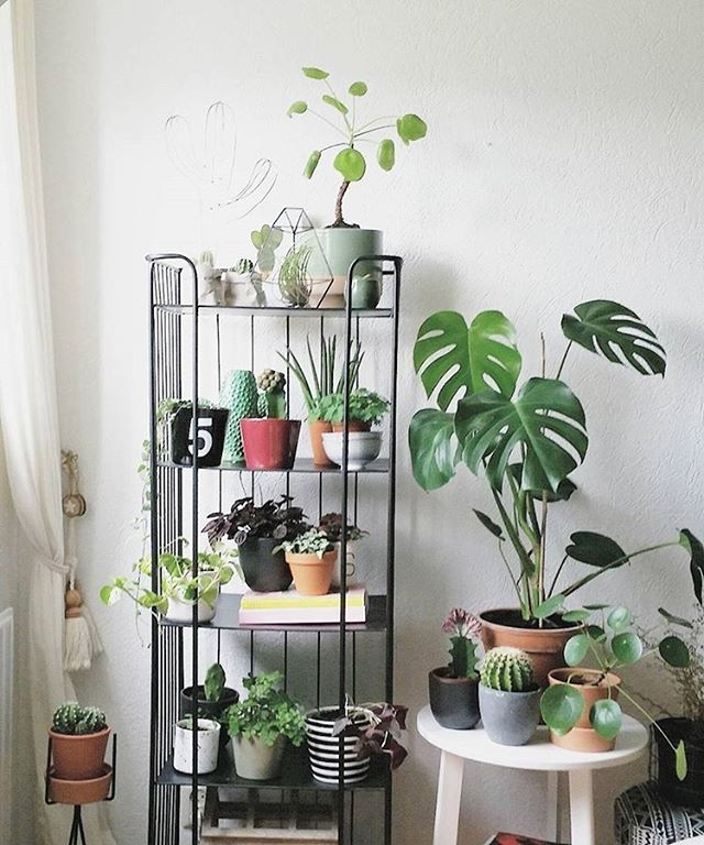 13 best I dream about these plants images on Pinterest House - pflanzen für wohnzimmer