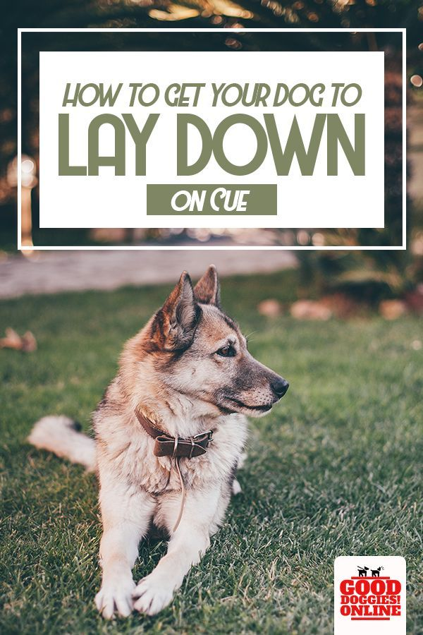 Dog Training Tips How To Get Your Dog To Lay Down On Cue