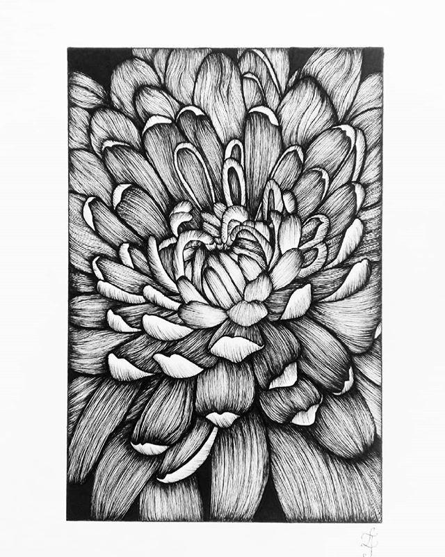 Chrysanthemum Chrysanthemum Flowers Floralsyourway Florals Botanicallinedrawing Flowersinsta Botanical Line Drawing Textile Artists Chrysanthemum Drawing