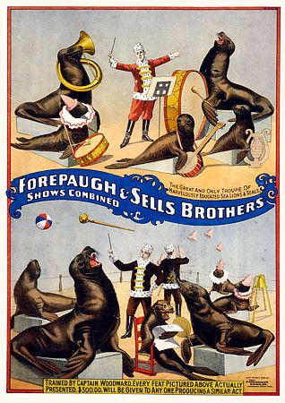 'Troupe of Educated Sea Lions and Seals' #vintage #circus #poster