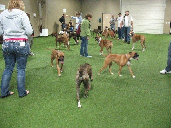 25 Best Ideas About Indoor Dog Park On Pinterest Dog