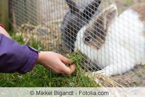 die besten 17 ideen zu kaninchengehege selber bauen auf pinterest kaninchengehege bauen. Black Bedroom Furniture Sets. Home Design Ideas