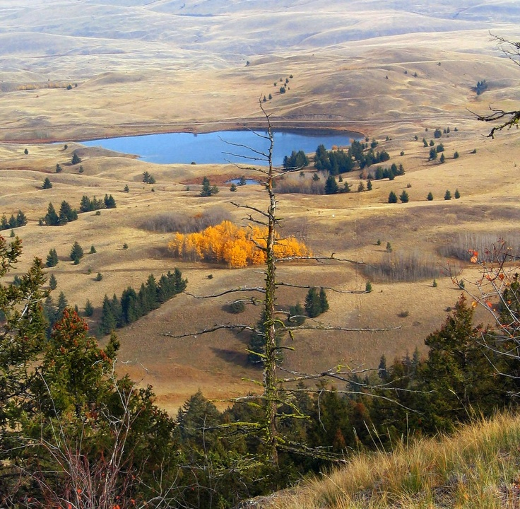 Grasslands nr. Kamloops, BC - one of my favorite places. So beautiful, dry, warm....