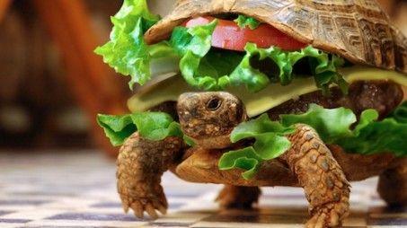 Broodje schildpad gaat op reis