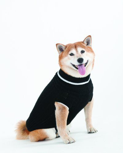 Fashion Pet Lookin Good Classic Cable Sweater for Dogs, Medium, Black - http://www.thepuppy.org/fashion-pet-lookin-good-classic-cable-sweater-for-dogs-medium-black/