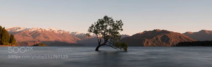 wanaka tree - photo by christoph-schaarschmidt / 500px