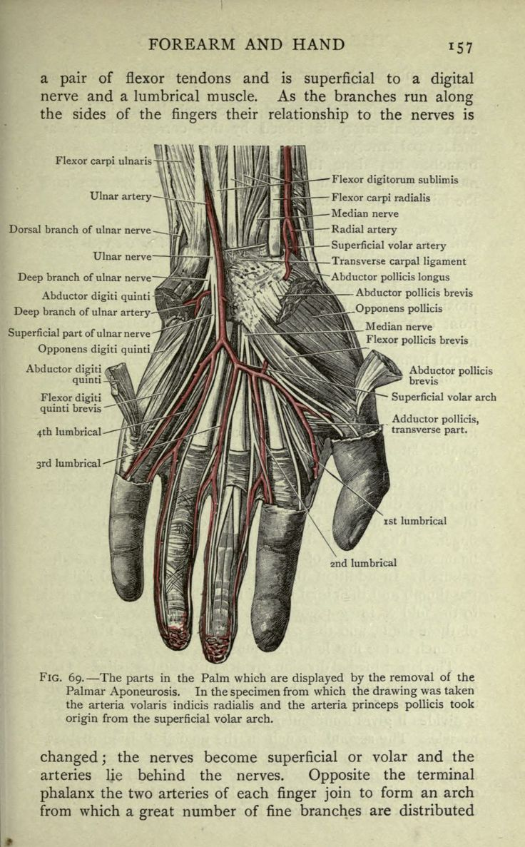 86 Best Anatomy Images On Pinterest Manual Guide