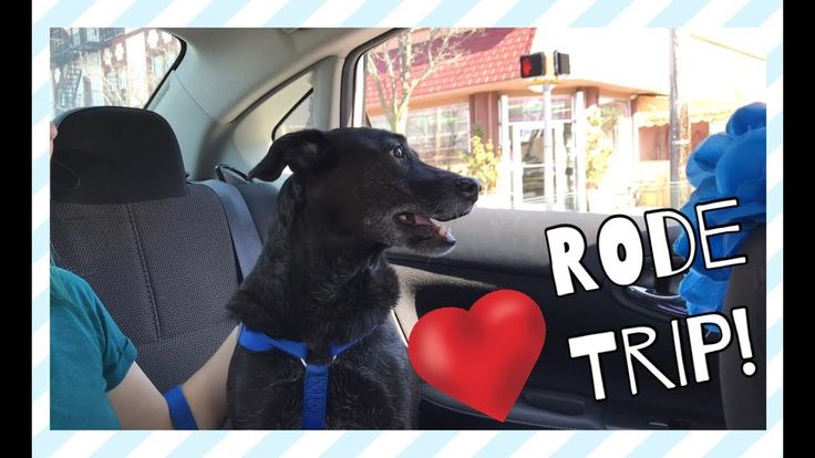 Dog Loves Car Rides! | Katie Nicole Thanks for watching! Please like comment and hit that Red Button and turn on the notification bell! https://www.youtube.com/channel/UC4BJdXdxIKCU0B-zzfmDtIQ Watch of all my videos here! - https://www.youtube.com/playlist?list=PLET-gbl0PZJ_UEpMyNQ6zHK5cudYbSTuo Follow me on Instagram @katie_nicolec - http://ift.tt/2DY644Q Love donations to my paypal  - http://ift.tt/2EBYRsk Wanna send me mail? P.O. BOX ADDRESS - Katie Nicole P.O. BOX 440 Farmingdale NJ…