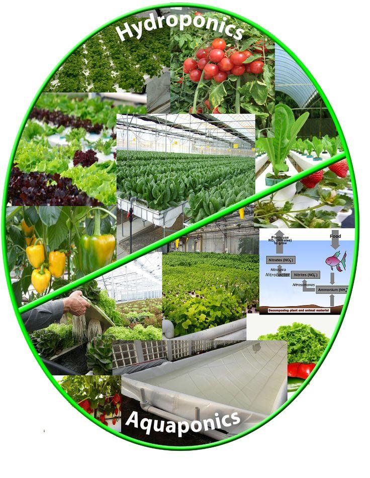17 best images about greenhouse aquaponics hydroponics for Koi pond hydroponics
