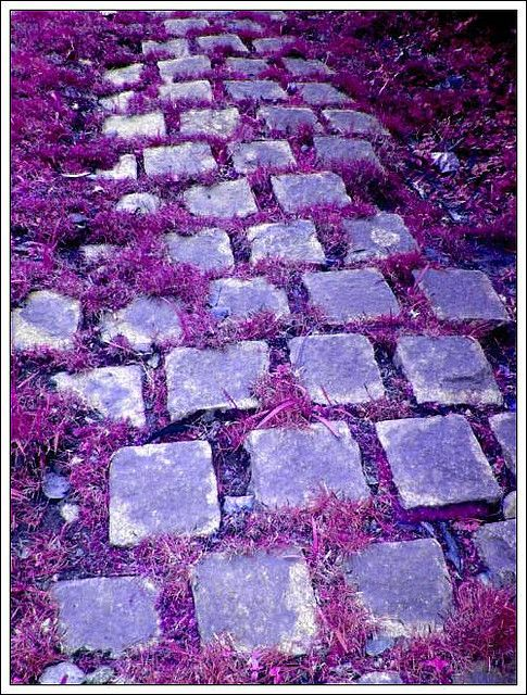 Follow the purple road...