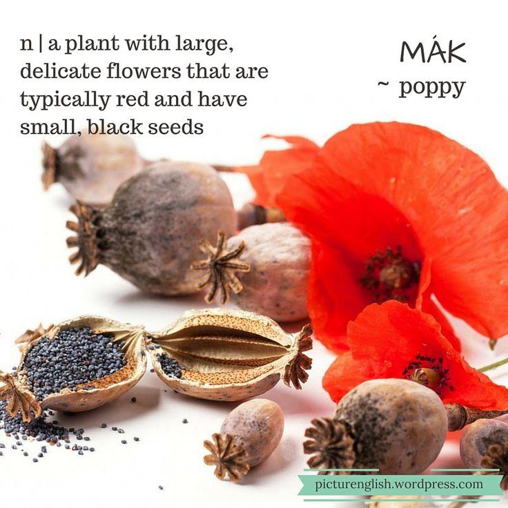 Poppy / Mák