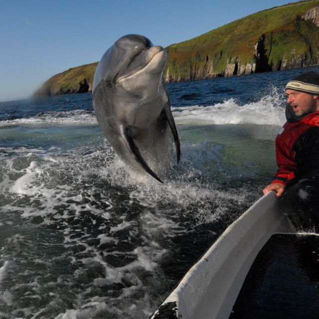 Dingle Bay @ Kerry, Ireland: Funny Pics, Dolphins, The Ocean, Boats, Funny Meme, Happy Pictures, Photo, Saturday Mornings, Animal