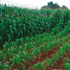 El abonado mineral controlado producirá más cosechas y de mejor calidad, la fertilidad del suelo se conserva y mejora. Resulta rentable desde un punto de vista económico. Mantiene un contenido de minerales en el suelo, así la planta los absorbe en el momento y en la cantidad necesaria.
