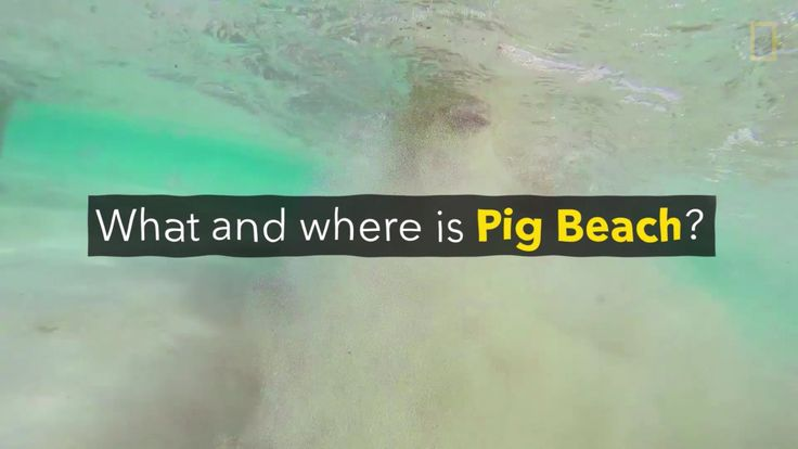 Welcome to Pig Beach, an uninhabited island in the Bahamas that is home to dozens of feral pigs.
