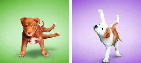Yoga Dogs by Dan Borris (11)