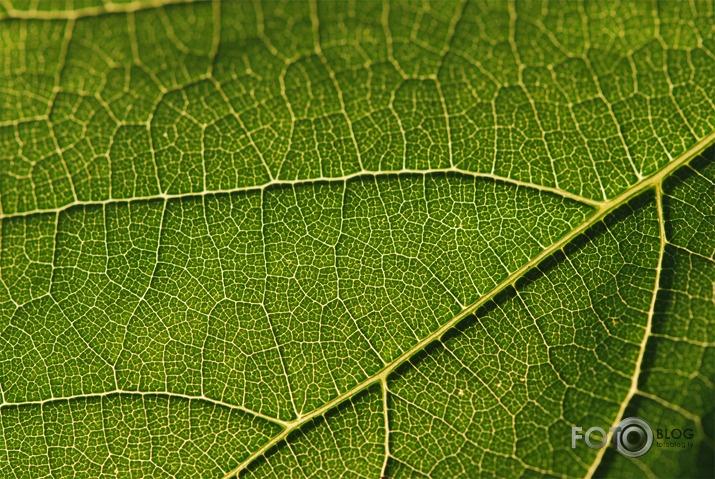 Pin af kazuya arakawa p green pinterest for Gartenpool 3 x 2