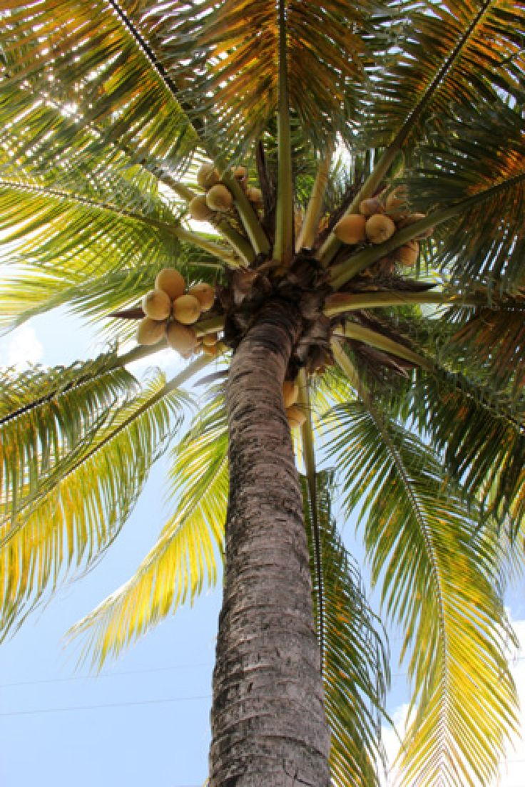 - Photos de vacances de Antilles Location #Guadeloupe