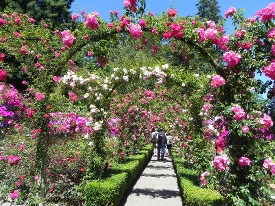32 Best Images About Rose Garden On Pinterest Canada Ingrid Bergman And Blog