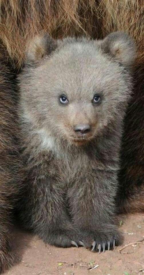 Cuteeee Bear Cub!