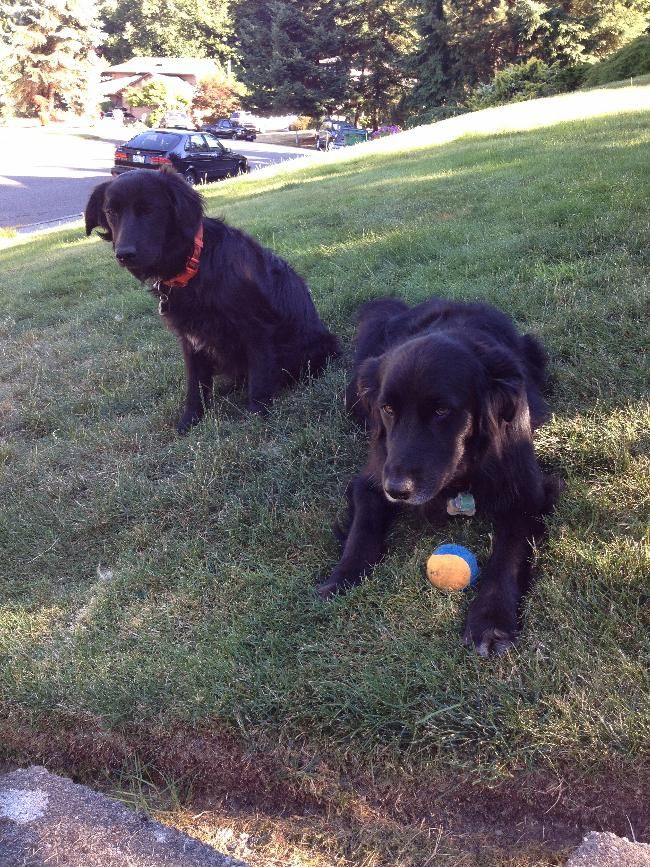 Pet/home sitter needed for 2 weeks  House Sitter Needed  Town, Brier   Snohomish,Washington United States  Sep 20,2014 For 9-20-14 to 10-4-2014   Short Term Not a member? Join today to contact homeowner jack_zeke We have 2 great dogs, Jack (age 7) & Zeke (age 2). They are are energetic and a couple of walks a day and/or ball chasing. They enjoy each others company, and will often rough house together, sometimes to the point of moving furniture a little.