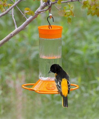 Oriole Nectar 2 cups water-1/3 cup sugar (6 water to 1 sugar)