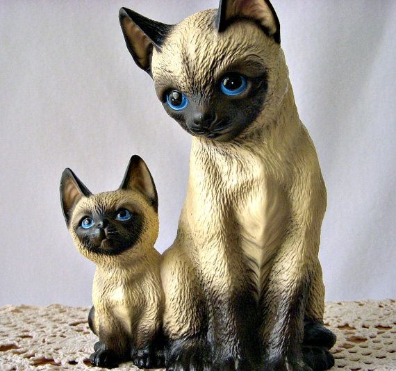 Camark Cats For Sale