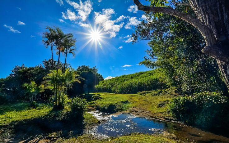Afryka, Francuska, Wyspa Reunion, Saint-Benoît, Potok, Promienie słońca, Drzewa, Krzewy