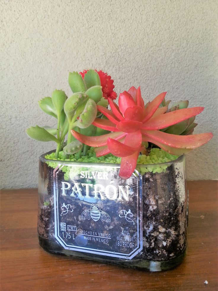 Patron dish makes a great succulent planter or empty as a snack dish!  Great gift!  From lookingsharpcactus.com   #lookingsharpcactus #patrontequila #patrongifts #patrondecor #SucculentPlanter #bottlegarden #bottlegardens #planters  #succulent #succulents #succulentplants  #pottedsucculents #hangingterrarium #garden #tequila #tequilabottle #bottledecor  #Christmasgifts #christmasgiftsideas #christmasgiftforher #christmasgiftformyself #boyfriendgift #patrongifts #alcoholgift #liquorgifts
