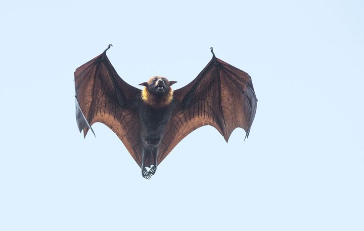 Want free fertilizer? Fewer pesky insects? Bats can help - here are 5 ways to attract more of them to your yard.