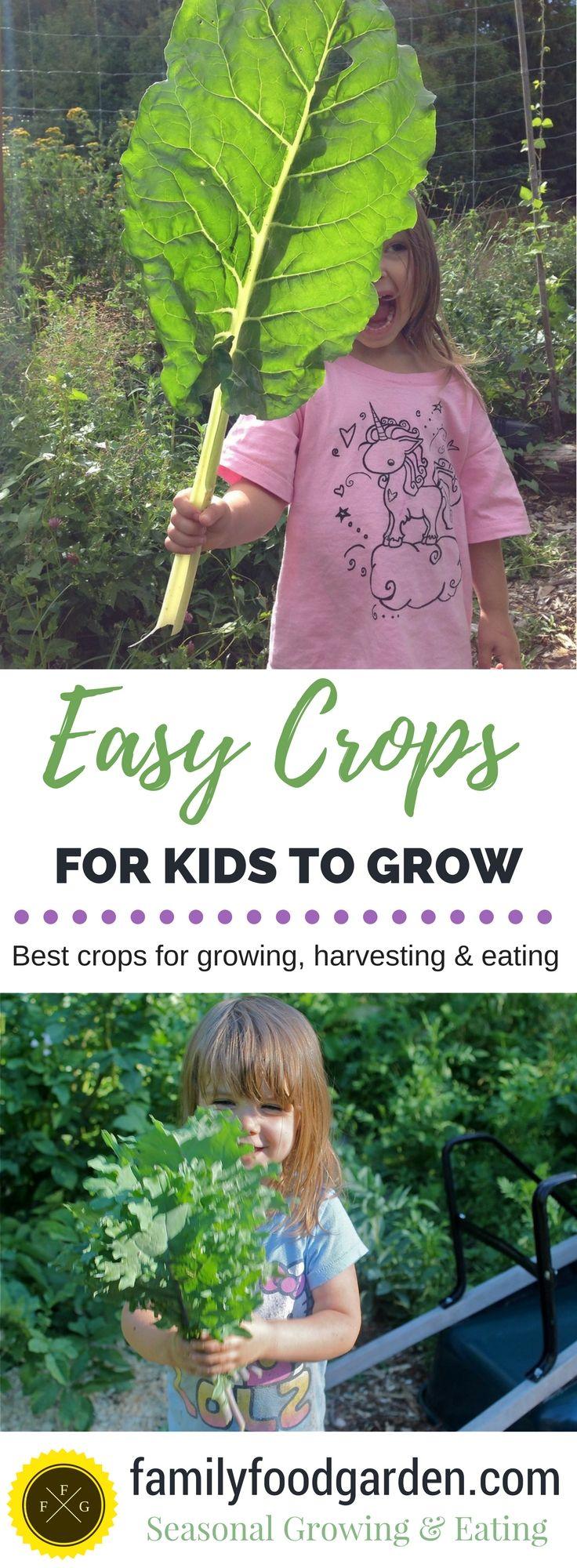 Modren Herb Garden Ideas For Kids To Grow Inside Design