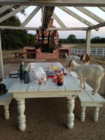 Joanna Gaines's Blog/ like farmhouse table with turned legs