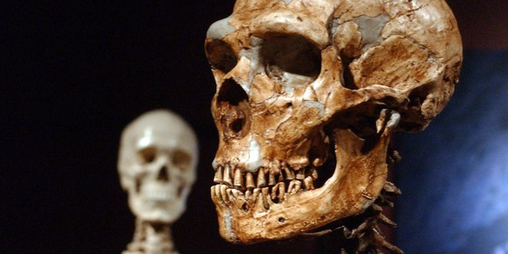 Who Shot this Neanderthal? The Mystery of Ancient Skulls with Bullet Holes