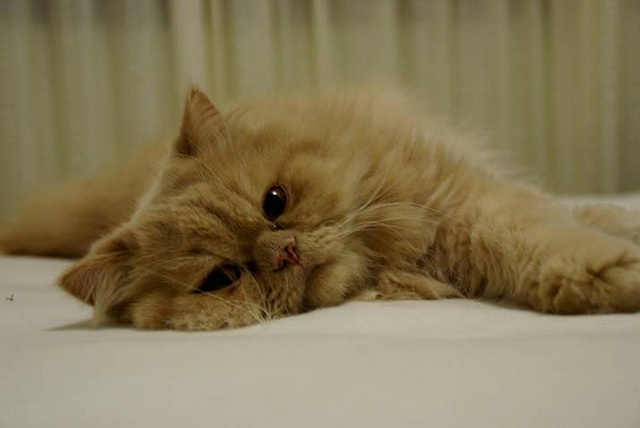 i'm just chillin:): Animal Things, Animal Cuties, Photo Sharing, Nice