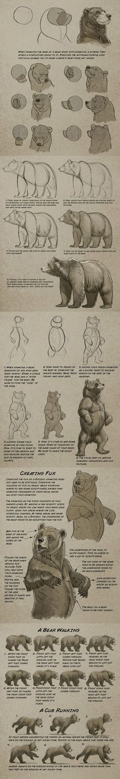 grizzly bear drawing tutorial by Aaron Blaise