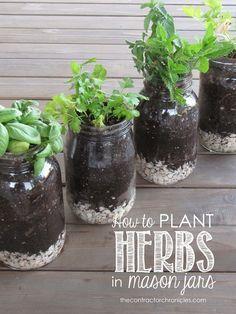guia de plantar em potes de vidro