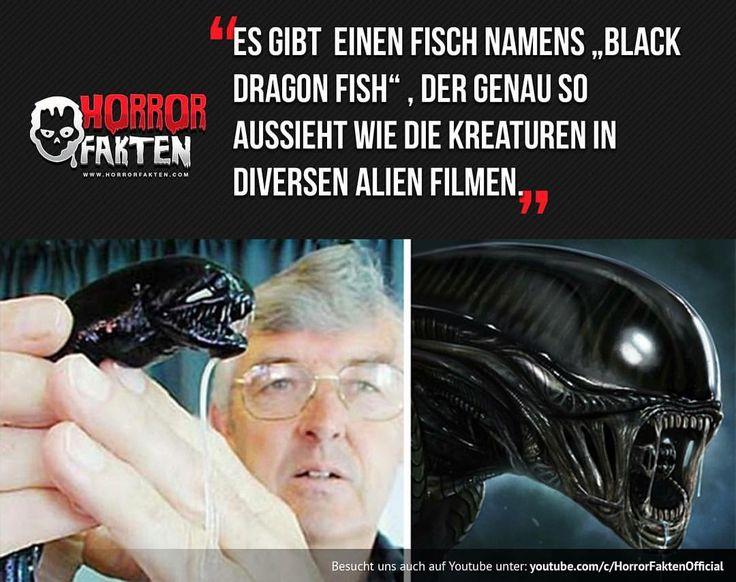 Krass #horrorfakten