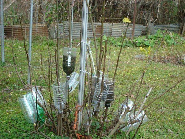 """""""Воздушные отводки"""" - применяют для размножения большого числа древесных культур. Этот способ чрезвычайно удобен, поскольку он не требует специального оборудования, а растения мало повреждаются.  …"""