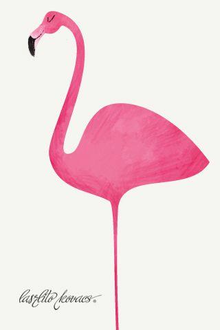 Flamingo  Laszlito Kovacs