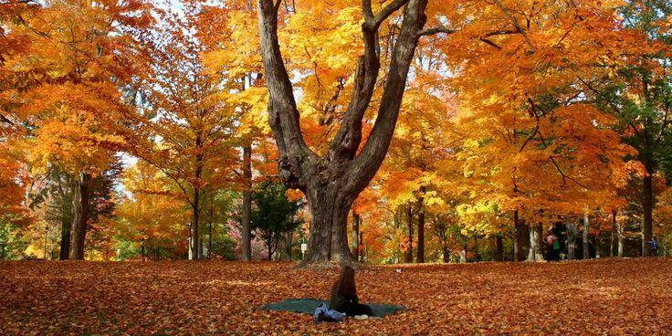 ✳ Get this free picture Trees during Autumn    ▶ https://avopix.com/photo/62212-trees-during-autumn    #oak #tree #forest #landscape #park #avopix #free #photos #public #domain