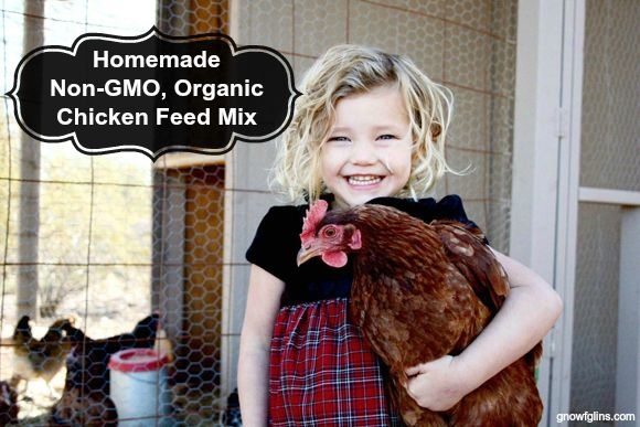 If you are raising backyard chickens, you may have read the contents on the bag of chicken feed. Those contents include handfuls of names that are difficult to pronounce and quite questionable as to what the feed really includes. Do we really want our chickens eating that? The answer to this concern-- Homemade Non-GMO and Organic Chicken Feed Mix.